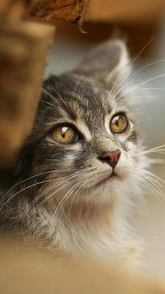 14 Cute Kittens Who Might Just Save the World - meowlogy Cute Kittens, Cats And Kittens, Pretty Cats, Beautiful Cats, Animals Beautiful, Cute Animals, Wild Animals, Beautiful Pictures, I Love Cats