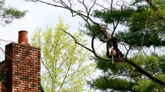 Was muss man bei der Baumfällung beachten? #Baumschutzsatzung und #Fällgenehmigung für Ihre Region.  #Baumfällung #Baum #Baumkletterer #Gartenbau