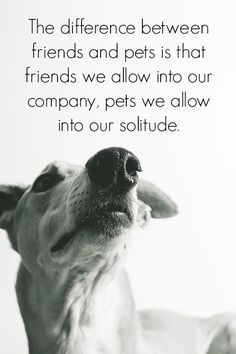 The difference between friends and pets.