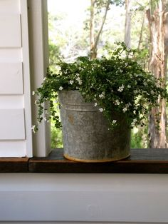 Zinc bucket with white flowers