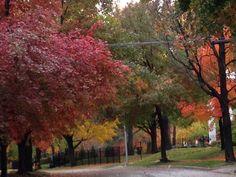 Autumn color. Leawood KS