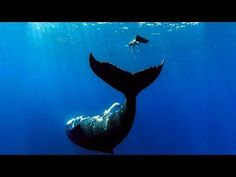 GoPro: Whale Fantasia (+playlist)  \3 sirens and 3 whales in the water\ @Autumn Hollingsworth