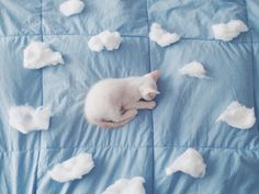 A kitty dream bed, blue, cat, clouds, pastel Ravenclaw, Cat And Cloud, Bleu Pastel, Everything Is Blue, Cat Aesthetic, Aesthetic Pastel, Soft Grunge, Powerpuff Girls, Crazy Cats