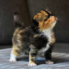 Cute Mythical Animals List up Adorable Kittens And Puppies after Really Cute Animals Gif these Cute Kittens And Puppies Doing Funny Things Kittens And Puppies, Cute Cats And Kittens, I Love Cats, Crazy Cats, Cool Cats, Kittens Cutest, Kittens Meowing, Fluffy Kittens, Pretty Cats