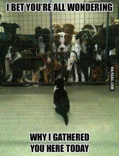 lol #animal funny
