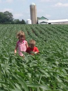 Future Farmers - Corn Felfie