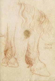 Drawing of a horse leg. The Forster Codex (page 23 recto; volume III), Leonardo da Vinci, late 15th – early 16th century, Italy. Museum no. Forster MS.141. © Victoria and Albert Museum, London