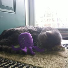 Sleeping with his octopus.