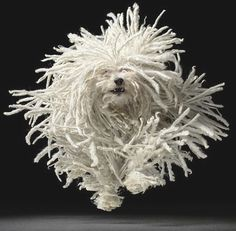 Hungarian dog breed called puli