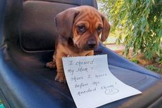 Hysterical Dog Shaming, LOL!!  Click for all pictures funny, humor, animals, lol, lmao, hahaha