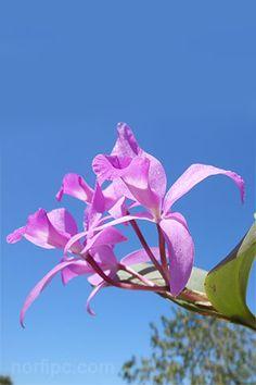 Fotos De Flores Y Rosas Para Fondo De Pantalla Del Celular Y Tableta Flores Orquideas Fondo Pantalla Celular