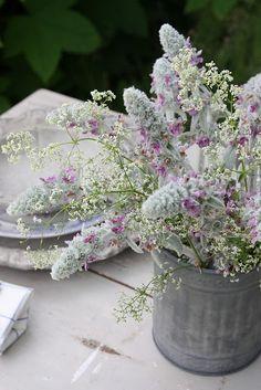 Swedish garden flowers