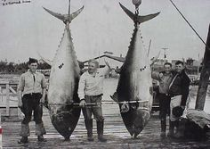 It is said to be the largest bluefin. Description from ijumynesyla.comoj.com. I…