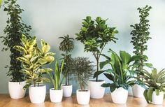House plants _xfpt.jpg