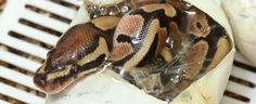229_reptiles