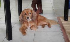 O meu cão Semi