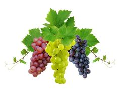 Una copa de vino relaja y estimula nuestros sentidos.   Mucho vino nos puede emborrachar o poner dormir.   Se dice que es un afrodisíaco masculino.