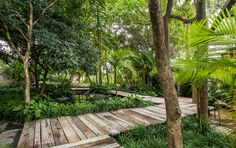 gilberto elkis paisagismo / jardim do bosque, casa cor 2015 são paulo