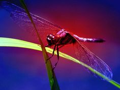 best images about INSECTS on Pinterest Macro photo Praying