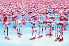 How Do Flamingos Get Their Pink Color?