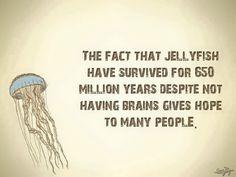Jellyfish survival