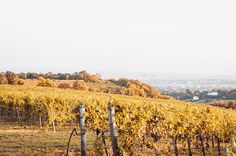 Sometimes, we just have to enjoy the moment and appreciate what we have ☀️🍁• • • • • #autumn #colors #hill #art #mountain #fog #tones #agameoftones #bestoftheday #landscape #vienna #austria #like4like #follow4follow #photography #photographer #_allshots #l4l #f4f #followme #instalike#tbt #instagood #urban #urbex #explore #create #inspire  #trytogetbetter #youarenotalone