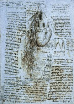 Drawing of bovine heart, great vessels and bronchial tree - Leonardo da Vinci (full-size) - Wellcome Collection