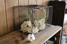 アンティークな「鳥かご」が、インテリアにとてもおしゃれって、皆さんはご存じでした? ガーデンや玄… Terrarium, Interior Design, Plants, Store, Home Decor, Terrariums, Nest Design, Decoration Home, Home Interior Design