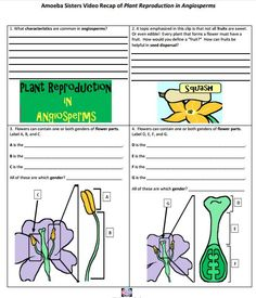 1000 images about amoeba sisters handouts on pinterest mitosis website and flower reproduction. Black Bedroom Furniture Sets. Home Design Ideas