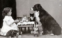 Great teaparty - photo provided by magic moonlight