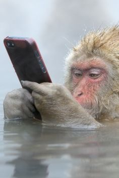 Incredible photo as snow monkey takes iPhone away from tourist, then uses it! - Lost At E Minor: For creative people hahahahahaha Animals And Pets, Baby Animals, Funny Animals, Cute Animals, Beautiful Creatures, Animals Beautiful, Animal Antics, Tier Fotos, Orangutan