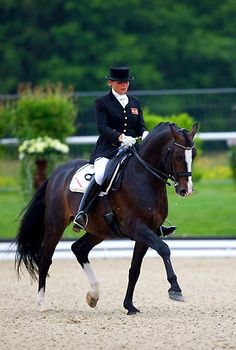 Bartlgut's CALACCIO  born 19.03.2003              Holsteiner / WB Stallion              Colour: Dark Brown