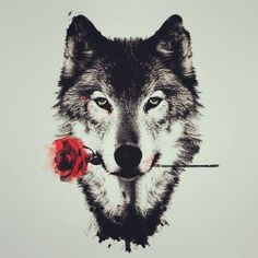 dibujo de lobo con una rosa roja