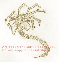 Image detail for -Facehugger sketch by *fallout161 on deviantART