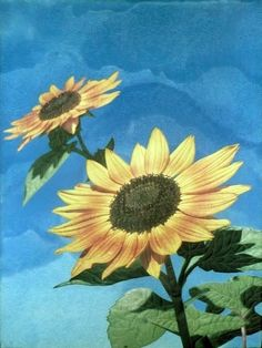 """""""Under the Sunflowers"""" quilt by Barbara McKie.  Photo by Sue Garman: May 2011."""
