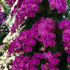 [ B a l i ] ❤ Amazing #orchidea... Nature is so beautiful ❤️ . * * * * * #bali #indonesia #asia #trip #travel #goodtravel #destination #amazingplace #instapic #instatravel #adventure #instanature #nature #tree #photooftheday #balistyle #lovebali #baliisland #aboutalovelytrip #baliautrement #beautifulnature #color full #orchidee #orchidea