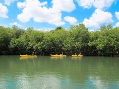 Salt River National Historic Park & Ecological Preserve Kayak Tours, Ecology, Preserve, Kayaking, Salt, River, Outdoor, Home, Chow Chow