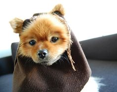 HOW TO – Make Star Wars Halloween Costumes for Dogs | MAKE
