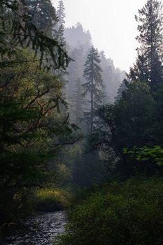 Lost Creek, Willamette National Forest, Oregon