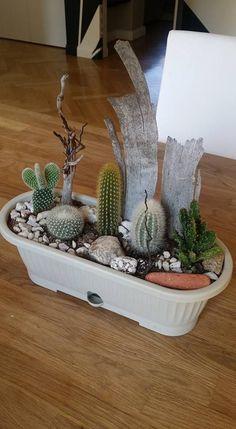 Com Suculentas Succulent Arrangements, Cacti And Succulents, Planting Succulents, Cactus Plants, Mini Cactus Garden, Succulent Gardening, Cactus Flower, House Plants Decor, Cactus Decor
