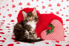 We Rank the Lovability of Valentine's Day Cat Photos Valentines Day Cat, Valentine Day Crafts, Happy Valentines Day, Valentine Theme, Funny Valentine, Kitten Wallpaper, Gifs, Kinds Of Cats, Cat Photography