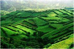 Mahatao hedgerows in Batanes