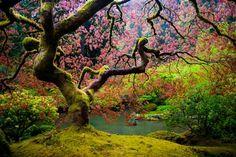 travelthisworld:  Japanese Garden in Portland, Oregon