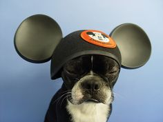 Oh dear, the mouse hat of shame!