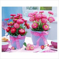 GAP Photos - Garden & Plant Picture Library - Bellis perennis in blue pots decorated with pink ribbon - GAP Photos - Specialising in horticultural photography