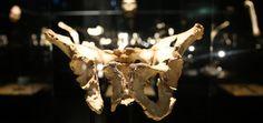 Exposición permanente | Museo de la Evolución Humana