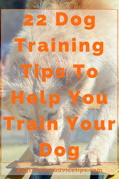 Mesmerizing Training Your Dog Proven, Useful Hints And Tips Ideas. Remarkable Training Your Dog Proven, Useful Hints And Tips Ideas. Dog Commands Training, Basic Dog Training, Puppy Training Tips, Potty Training, Training Dogs, Training Videos, Therapy Dog Training, Training Online, Training Schedule