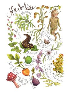 Movie Treasures By Brenda: Harry Potter Herbology Print. Ace that Hogwarts Schoo., DIY and Crafts, Movie Treasures By Brenda: Harry Potter Herbology Print. Ace that Hogwarts School of Witchcraft and Wizardry exam! Harry Potter Plants, Harry Potter Decor, Harry Potter Outfits, Harry Potter Fan Art, Magia Harry Potter, Classe Harry Potter, Harry Potter Tattoos, Harry Potter Drawings, Botanical Illustration