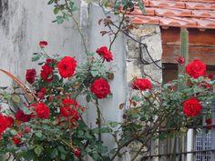 rosas+rojas+2+:+buena+mitad+de+semana+|+ahorayya2