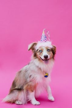 HOW TO Throw a Dog Birthday Party //  http://www.eatsleepwear.com/2016/09/21/lolas-fiesta/